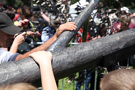 Tree Launch in Whittlesea